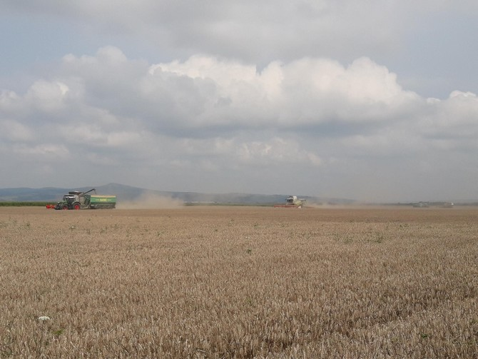 Oravita: Høsten startede allerede den 8. juni, men blev afbrudt af store vandmægnder